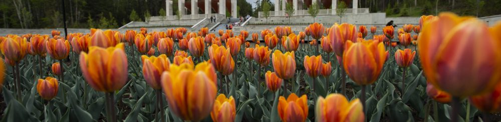 Whether you have a couple of hours, haf a day or a full day, plan your visit to the University of Alberta Botanic Garden (formerly Devonian Botanic Garden). Tips for visiting the University of Alberta Botanic Garden.