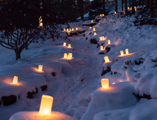 Luminaria candles in the snow